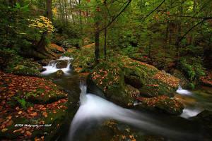 Autumn on Bad Branch II by TRBPhotographyLLC