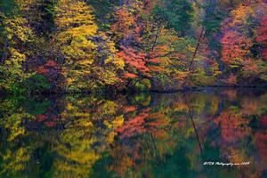 Fish Pond Color by TRBPhotographyLLC