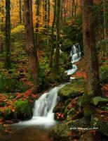 GSMNP Autumn 6 by TRBPhotographyLLC