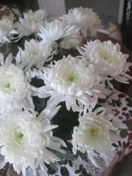 Easter Chrysanthemums 2 by KateMB19