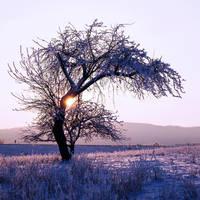 winter magic by Blaumohn