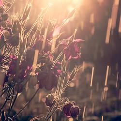 dust in the summer rain by Blaumohn