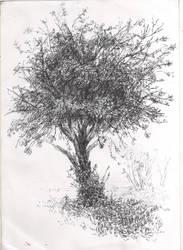 apple-tree by DartGarry
