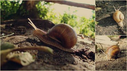 Snail by blast-wind