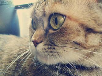 Little Cat by blast-wind