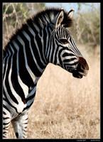 Foal by GeraldWinslow