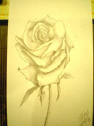 Rose by FabosAti