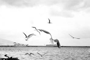 Seagulls around Kordon by esracolak