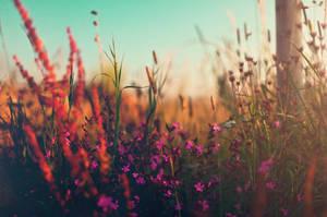Autumn haze by LukasSowada