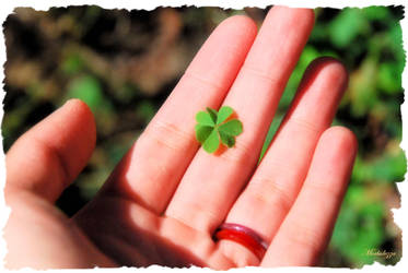 My four leaved clover by Morbidezza