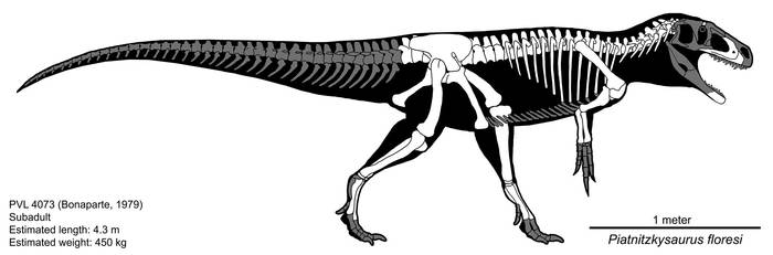 Piatnitzkysaurus floresi Skeletal Diagram by Paleocolour