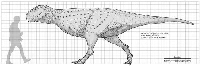 Skorpiovenator bustingorryi Size Chart by Paleocolour