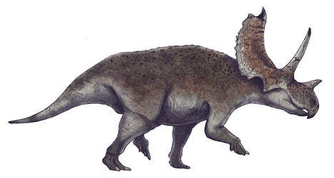 Agujaceratops mariscalensis by Paleocolour