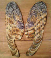 Barn Owl Wings- Stage 3 by TheCopperDragon2004