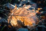 Old Leaf 2 by RunaCorner