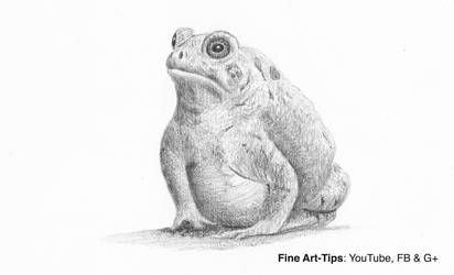 How to Draw a Toad (frog) - Narrated by ArtistLeonardo