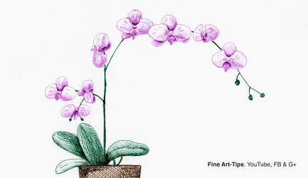 How to Draw an Orchid With Pen and Ink by ArtistLeonardo
