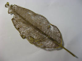 Leaf skeleton 1 stock by Eyespiral-stock