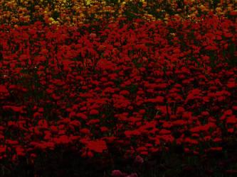flowerfields by dangerouspocky