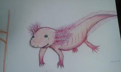 Axolotl by lussinka