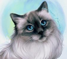 Siberian cat by MarkotnePierniki