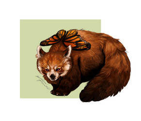 Red panda: butterfly by MarkotnePierniki