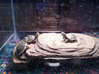 ninja turtles by wolfridersfla