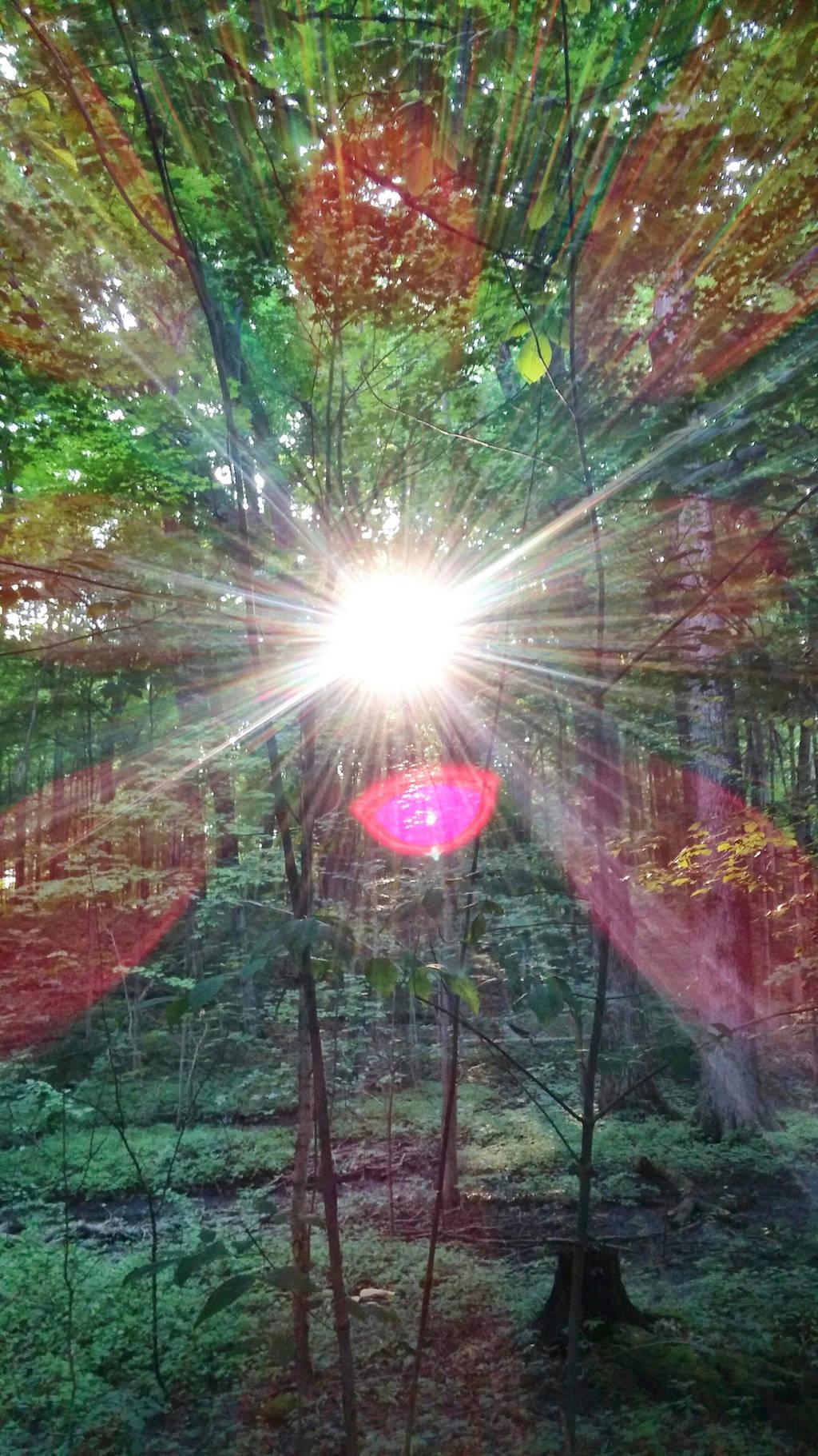 The Sacred Grove  by uhlrik