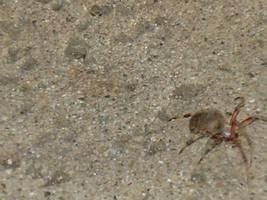 spider on concrete by uhlrik