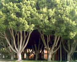 Dem Trees by uhlrik