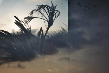 windstopper by Shosan