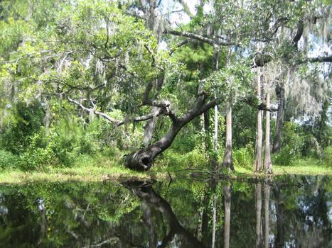 Swampy Reflections by animusanimi
