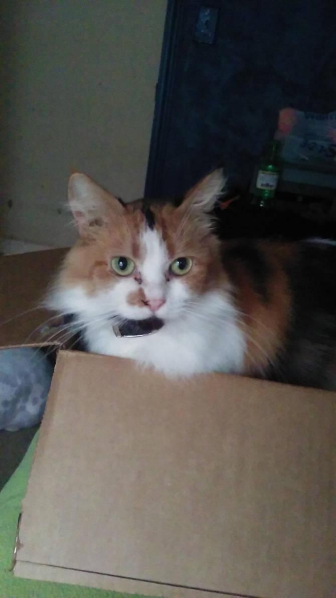 Its a Nilla Wafer in a box! by SoraHikari101