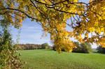 A Walk in October by StefanWolpert