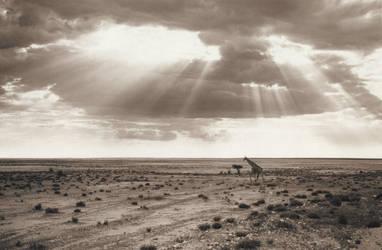 Etosha Pan, Namibia by seattleslough