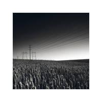 Fields of corn by smh-