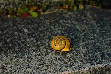 Snail by IAmTheFortress