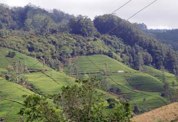 sunny tea hills by Takiako-Nakashi