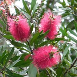 blossoms of tree by Takiako-Nakashi