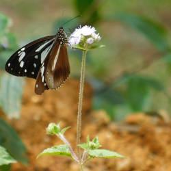 A butterfly by Takiako-Nakashi