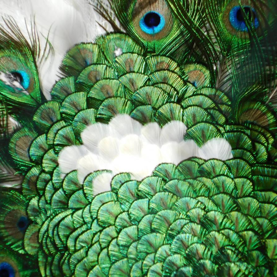 feathers by Takiako-Nakashi