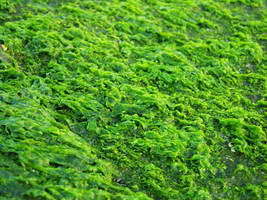 Moss Texture by FairieGoodMother
