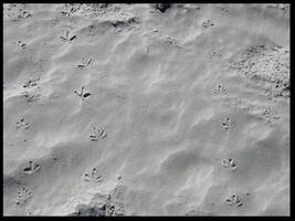 Bird Prints in the Sand 2 by FairieGoodMother