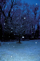 Snowing  stock 12 by FairieGoodMother