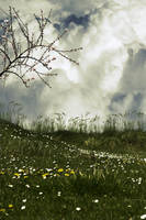 Premade Background 183 by FairieGoodMother