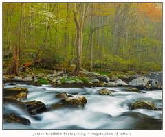 Smoky Mountain Spring Stream by joerossbach