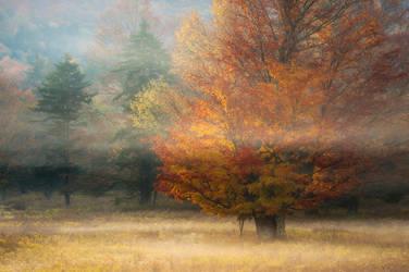 Fiery Maple by joerossbach
