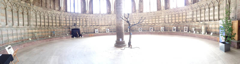 'A Celebration of Nature', Worcester Cathedral by Lit-Smith