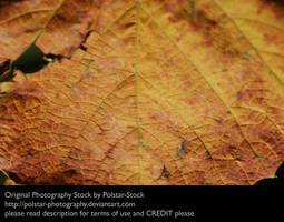 Leaf Texture 1 by Polstar-Stock