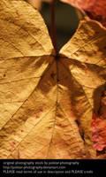 Leaf texture 3 by Polstar-Stock